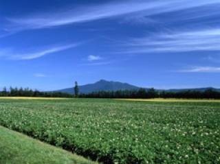 斜里岳の写真