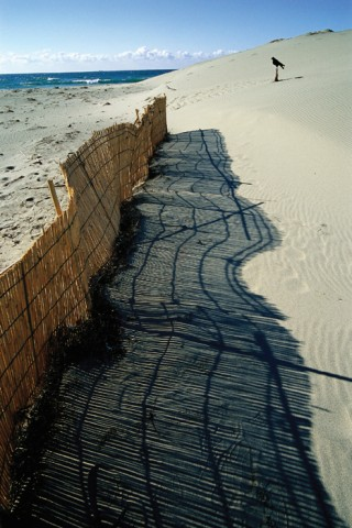 中田島砂丘の写真