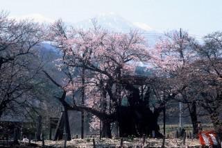 実相寺の写真