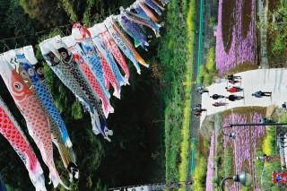 南八ヶ岳花の森公園の写真