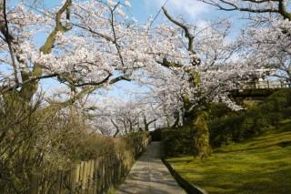 朝日山公園の写真