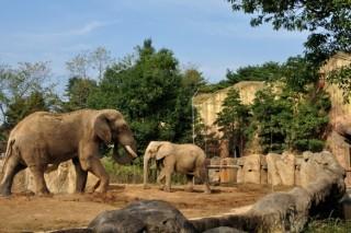セルコホーム ズーパラダイス八木山(八木山動物公園)の写真