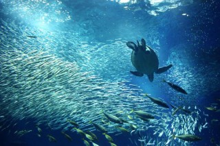 アクアワールド茨城県大洗水族館の写真