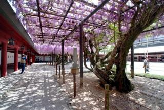 笠間稲荷神社の写真