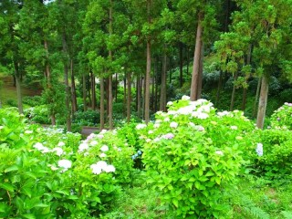 茨城県フラワーパークの写真