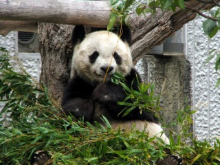 神戸市立王子動物園の写真