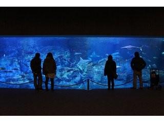 マリーンパレス水族館「うみたまご」の写真