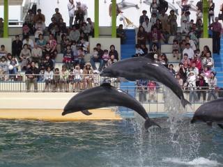 越前松島水族館の写真