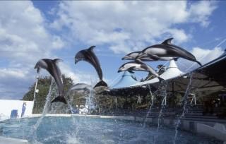 のとじま臨海公園水族館の写真
