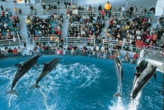 下関市立しものせき水族館 海響館の写真