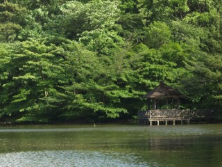 石神井公園の写真