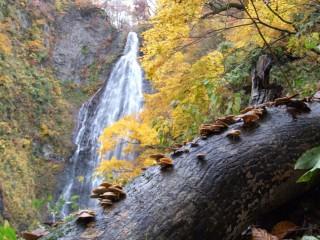 くろくまの滝の写真