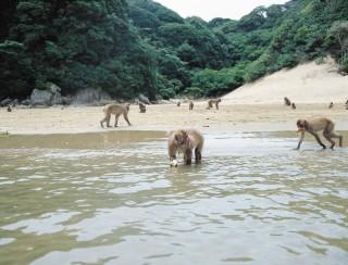 幸島の写真