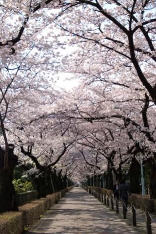 青山霊園の写真