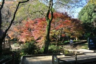 東高根森林公園の写真