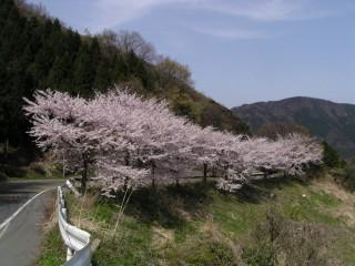 奥琵琶湖パークウェイの写真