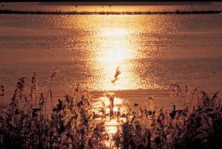 湖北町水鳥公園の写真