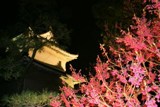 二条城の写真