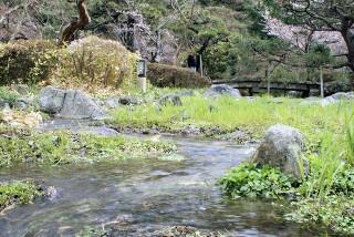 円山公園の写真