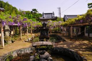 藤井寺の写真