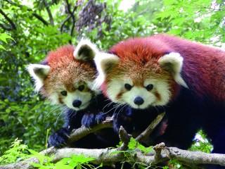 池田動物園の写真