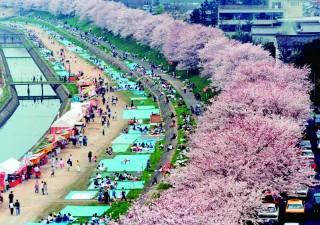 岡山さくらカーニバルの写真