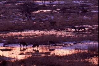 釧路湿原の写真