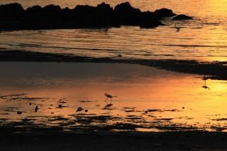 海岸寺海水浴場の写真
