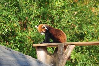 千葉市動物公園の写真