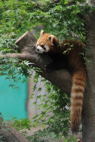 市川市動植物園の写真