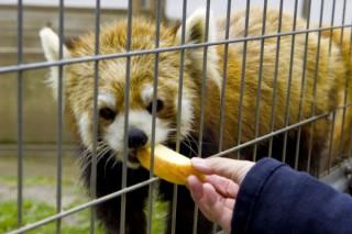 茶臼山動物園の写真