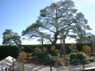 お宮の松(貫一・お宮の像)の写真