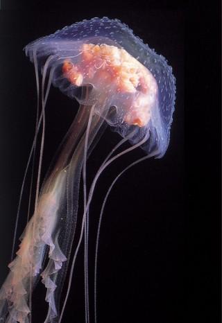 加茂水族館の写真