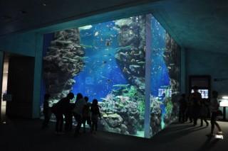 しまね海洋館アクアスの写真