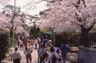 桐生が岡動物園の写真