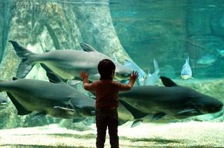 世界淡水魚園水族館 アクア・トト ぎふの写真