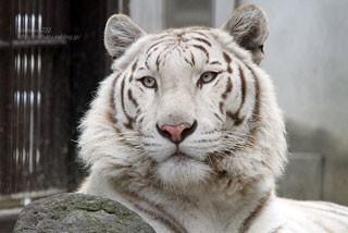 宇都宮動物園の写真