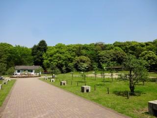 代々木公園の写真