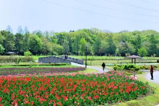 花の丘農林公苑の写真