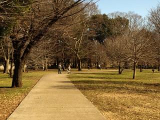 砧公園の写真
