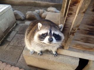 山梨市立万力動物園の写真