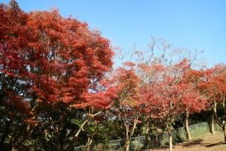 源氏山公園(鎌倉)の写真