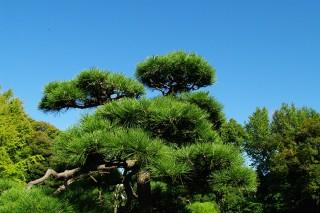 清澄庭園の写真