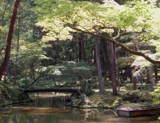 西芳寺(苔寺)の写真