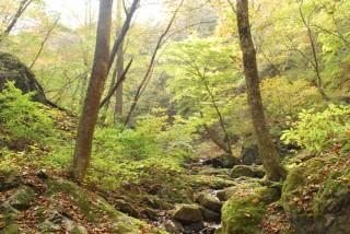御岳山ロックガーデンの写真