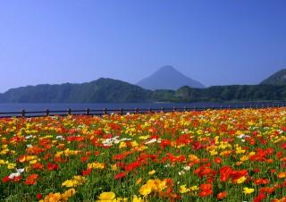 開聞岳の写真