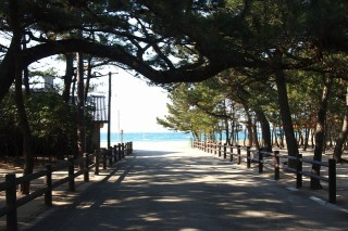 慶野松原海岸の写真