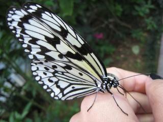 琉宮城蝶々園の写真