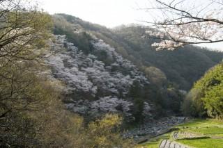 摂津峡温泉の写真