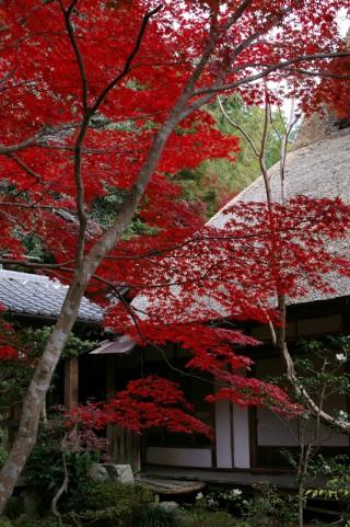 勝持寺の写真